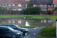 Paddling pool flooded Westlands green