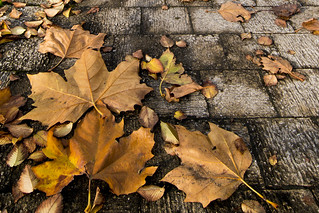 Autumn Leaves brown