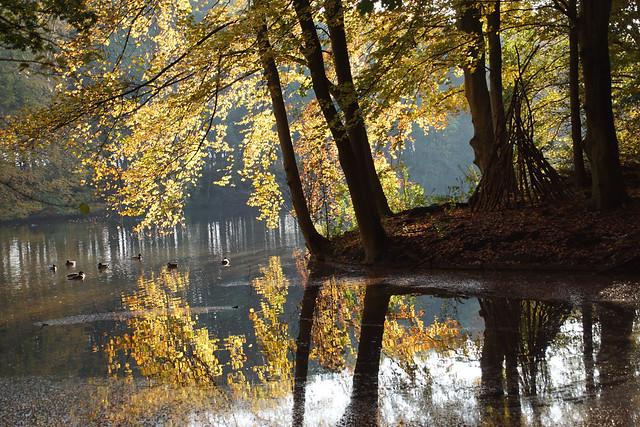 Autumn in Bovenkerk (Amsterdamse BOS)