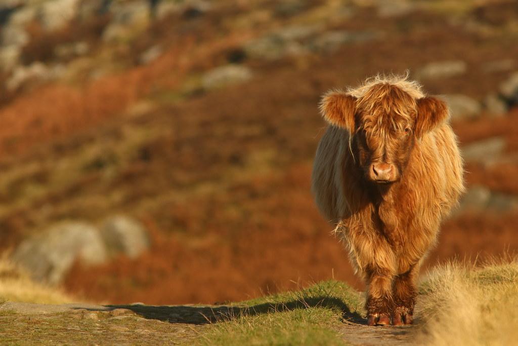 Highland Stroll