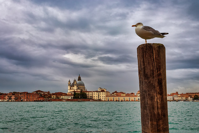 Venezia e il Gabbiano Jonathan Livingston (2) - Venice and the Seagull Jonathan Livingston (2)