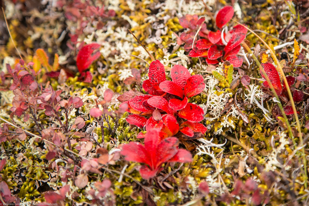 Denali NP 09 red 01 med (1 of 1)