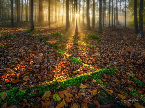 autumn natuur landscape nature mist nederland outdoor licht bos herfst trees bomen landschap sunrays forest zonnenstralen bergenopzoom fog netherlands light november2019 fall noordbrabant