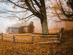 Foggy autumn day in the Applachian's