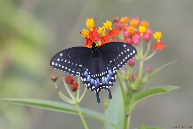 Butterfly 2019-173