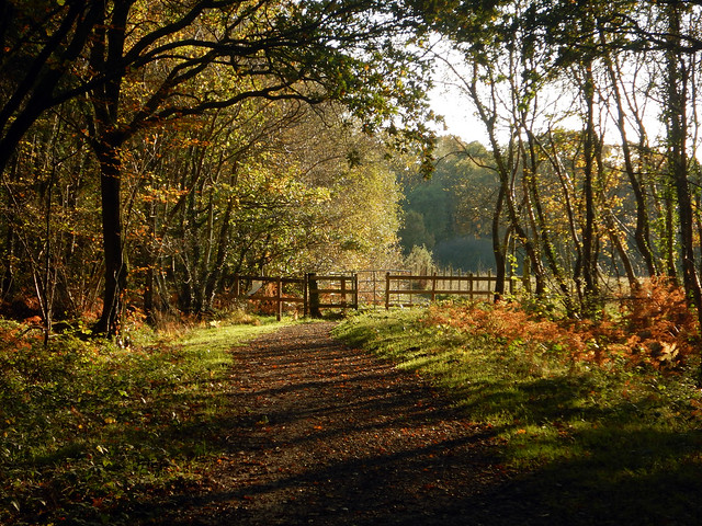 Havant Thicket in the Autumn