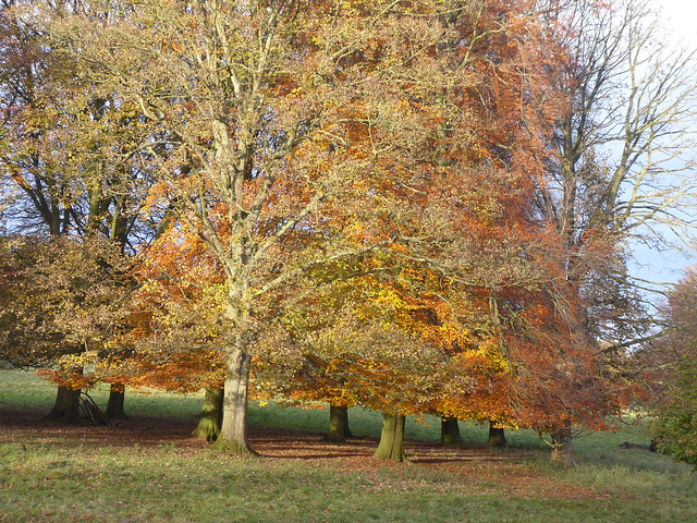 Autumn Trees, Fountains Abbey, North Yorkshire