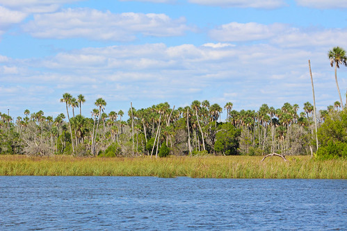 water river landscape scenery florida palmtrees hammock crystalriver
