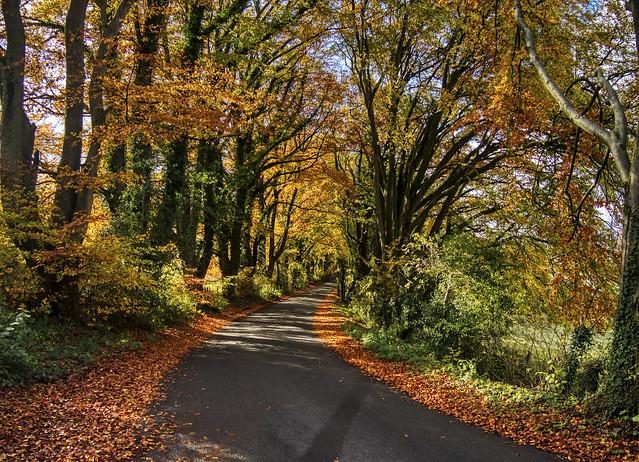 Autumn Colours near Winchester UK