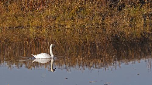 nature landscape naturereserve naturschutzgebiet animals birds waterbird seasons autumn fall
