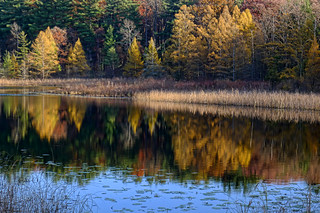 Pickeral Lake, near Hell, Michigan