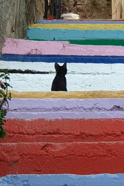 Cat On The Steps.