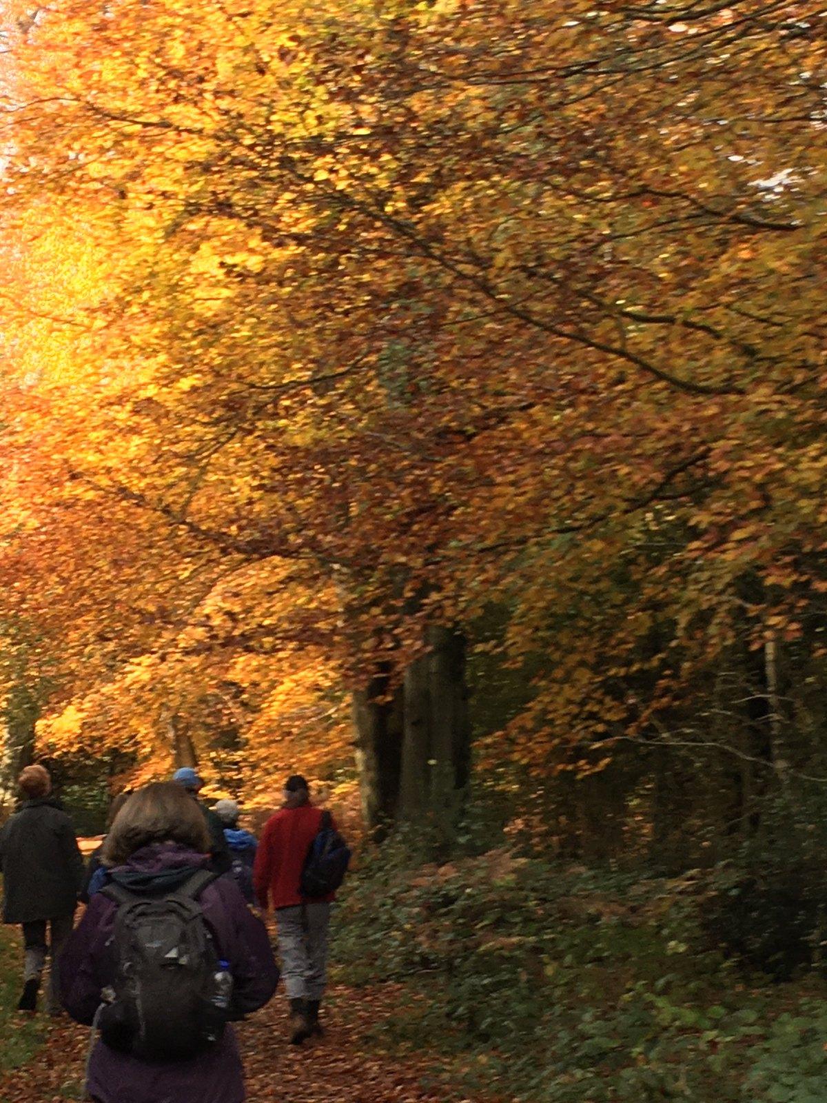 Autumn Oxted Short Circular