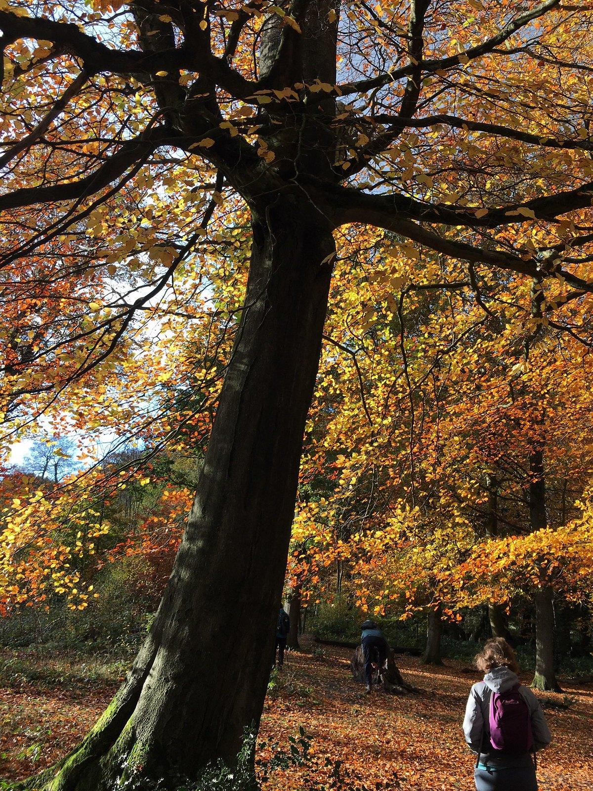 Autumn colour Oxted Short Circular
