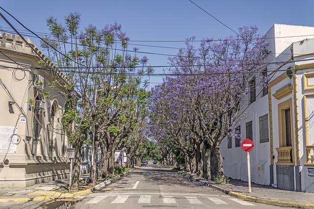 Calle en San Pedro