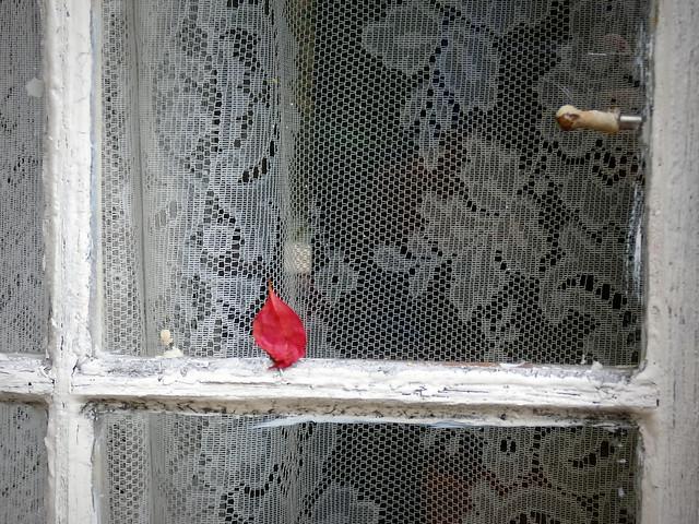 A lace curtain behind one red leaf