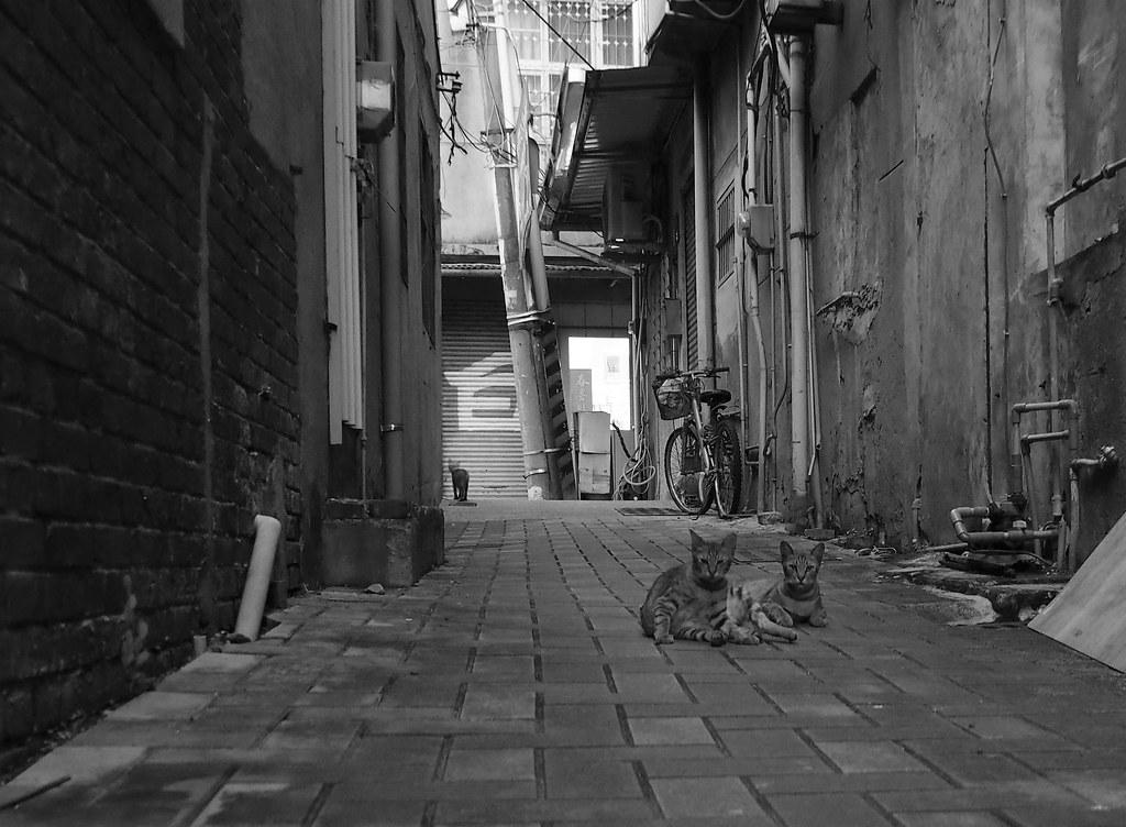 中西區蝸牛巷 (7)