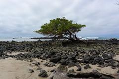 Beach on Isabela Island Playa en la Isla Isabela