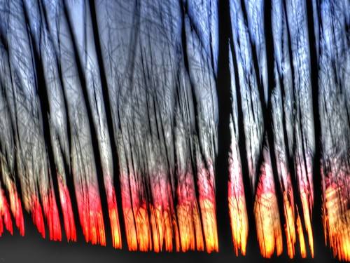 Forest sunset abstract