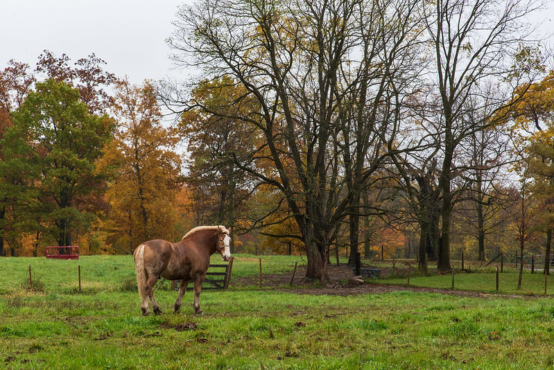 A Horse in the Pasture