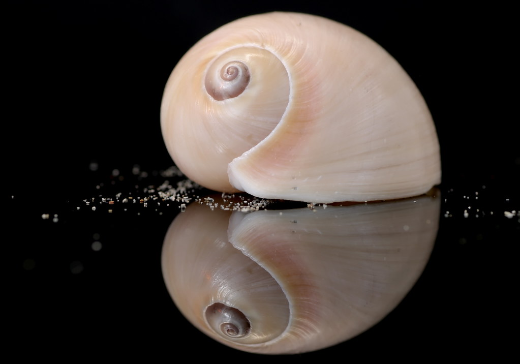 Shell We Reflect?