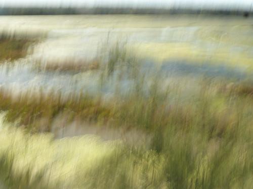 salt marsh - Ile de Re  P3090335