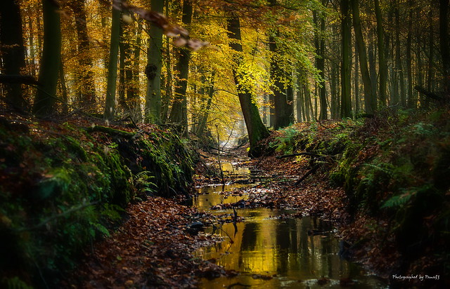 Tiste - Herbstwald