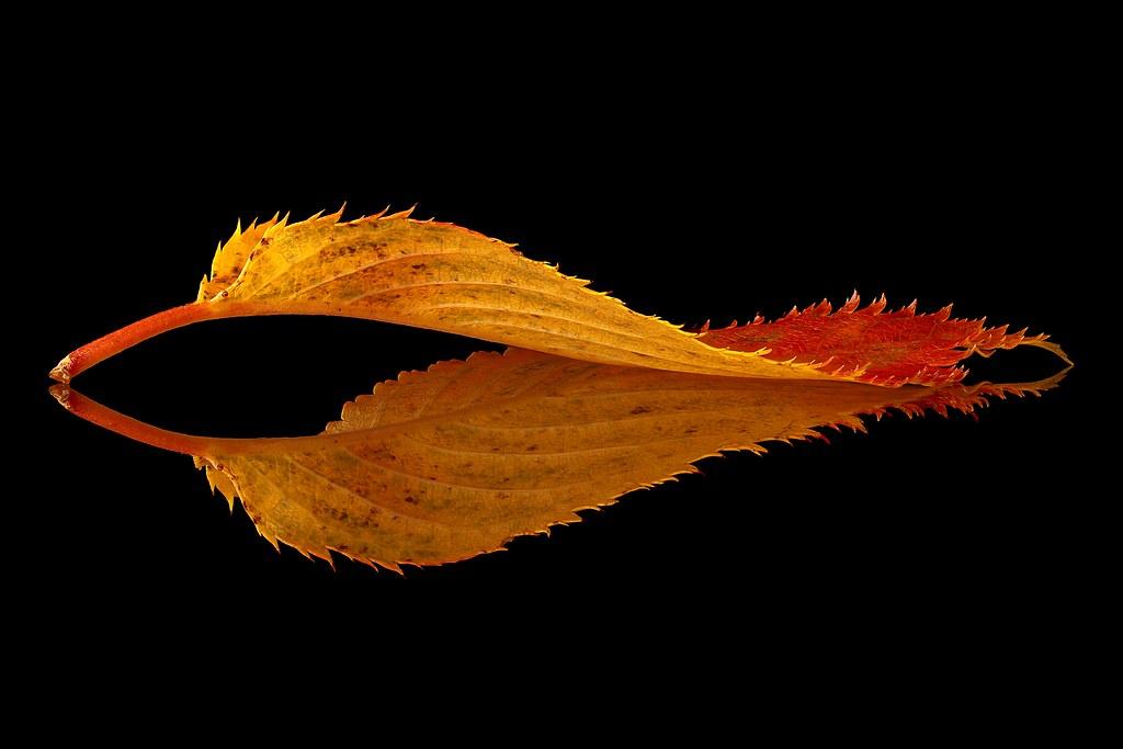 Autumn leaf ...