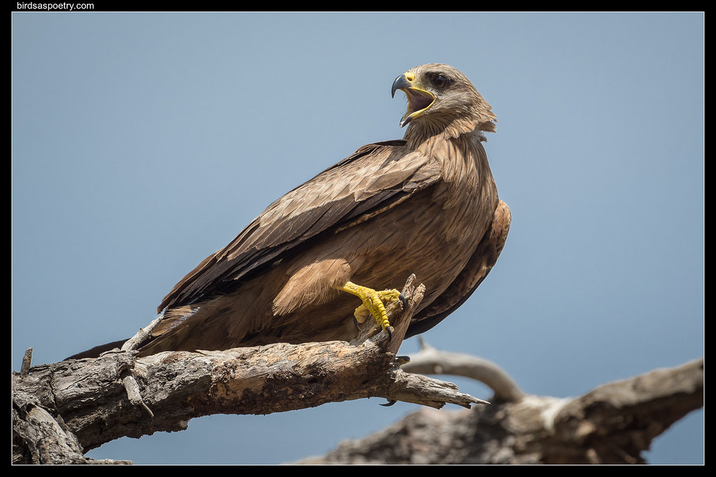 Black Kite: So, Punk, are You Feeling Lucky?