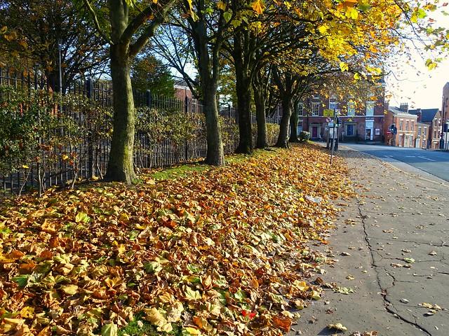Autumn colours in Preston
