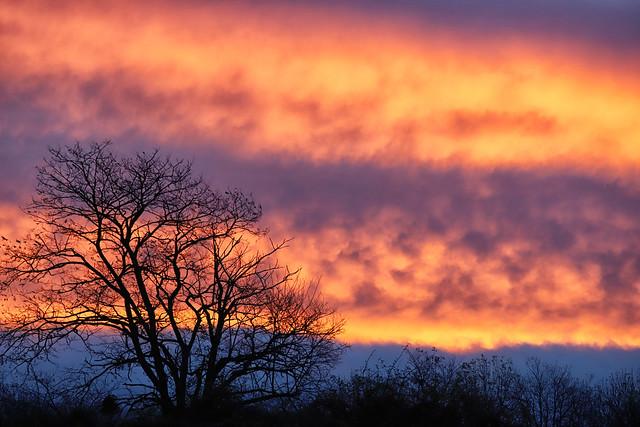 L'arbre du matin