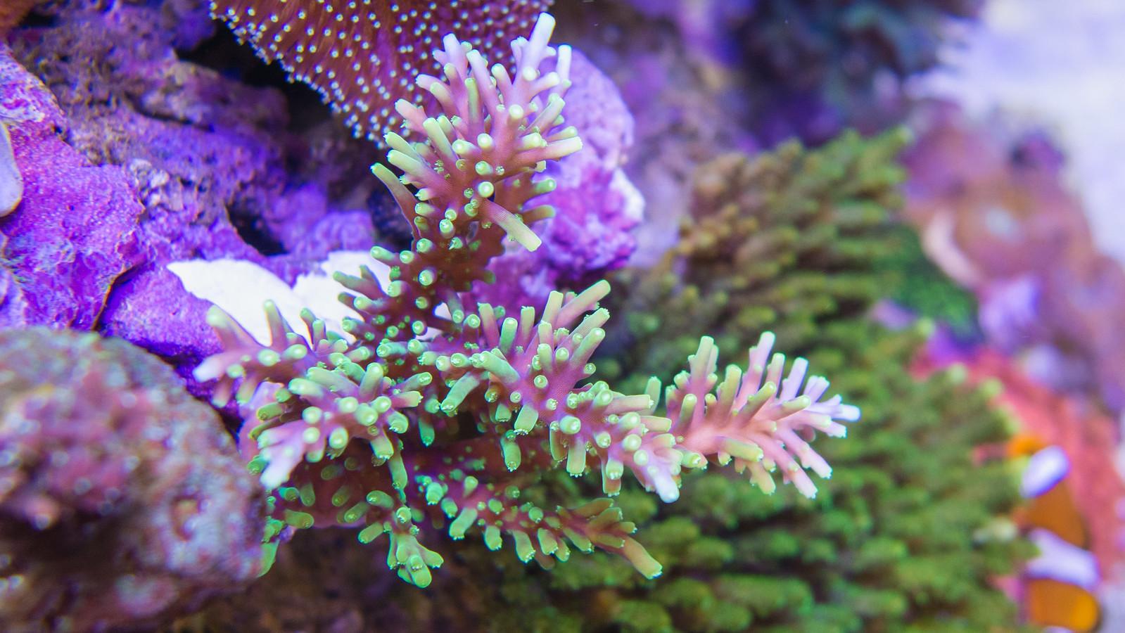 海水缸紀錄(滿 2 年又 8 天)