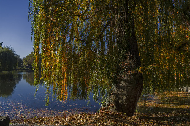 Old Willow at Anlagensee..