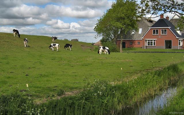 Groningen: Boerderij Englum
