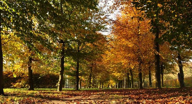 Walking under an autumnal roof...10-11-19