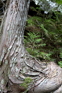 Twisted Trunk LV4A0473