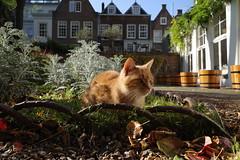 Utrecht beauty 🐈 #RicohGR #cats #CatsOfInstagram