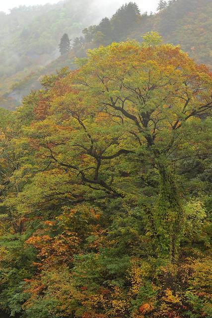 Autumn Follage in Nagano