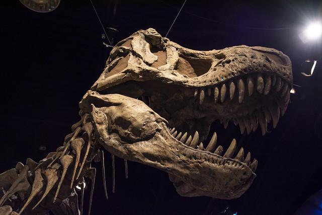 T-rex Over Head