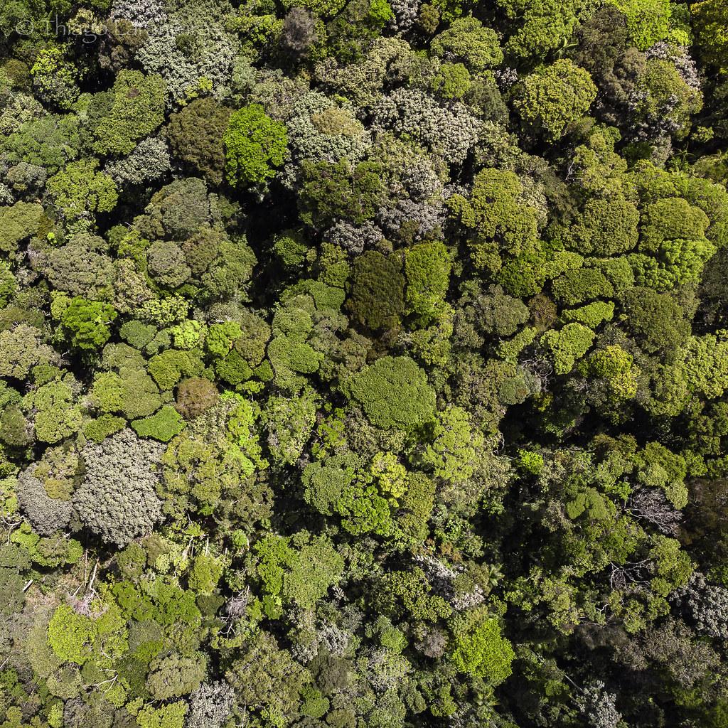 floresta quase brócolis.