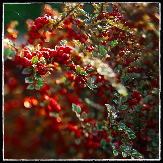 Sliced Berries