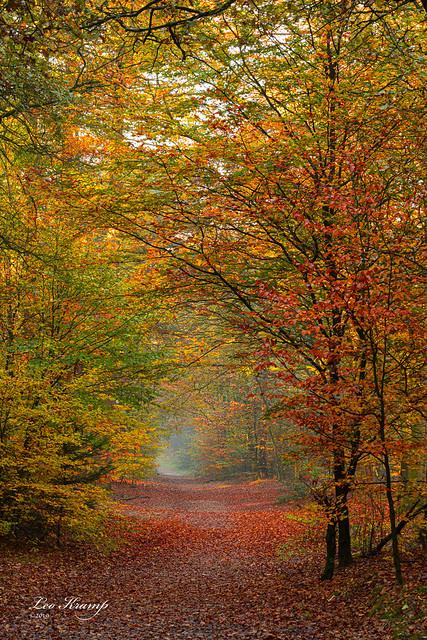 Autumn | Herfst Kaapse bossen