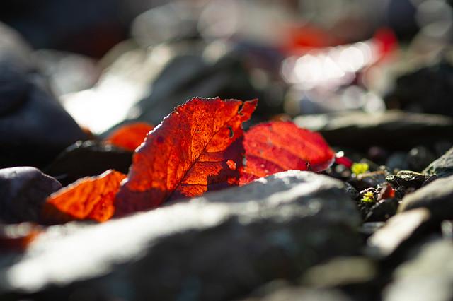 Foliage and stones