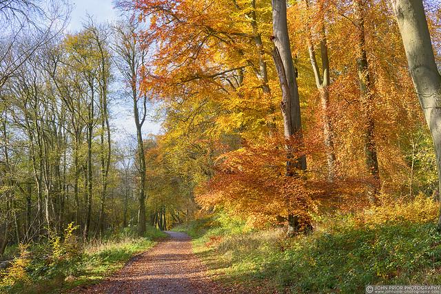 Ashridge autumn path