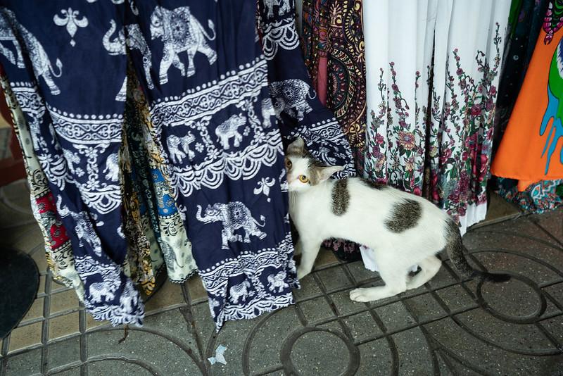 タイパンツと猫