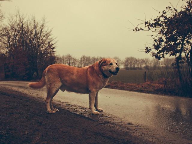 Old Dog | 20. Februar 2017 | Tarbek - Schleswig-Holstein - Deutschland