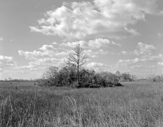 Everglades Hammock