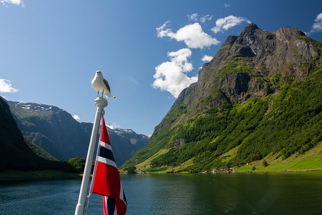 Proud Norwegian Gull