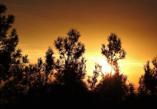 Sunset Through Trees - Hotel Bianco Olympico