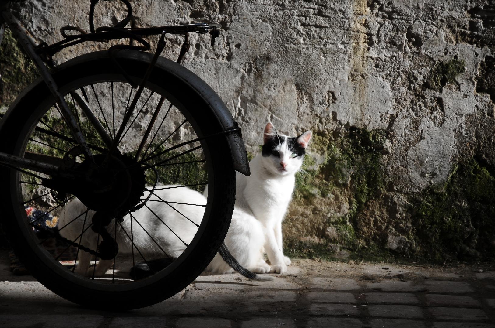 Chat roule bien